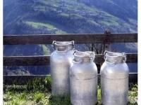 Calea laptelui spre piețele de desfacere, blocată fără motive plauzibile - iulie 2009