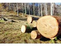 100.000 ha de pădure, sub atacul dăunătorilor forestieri