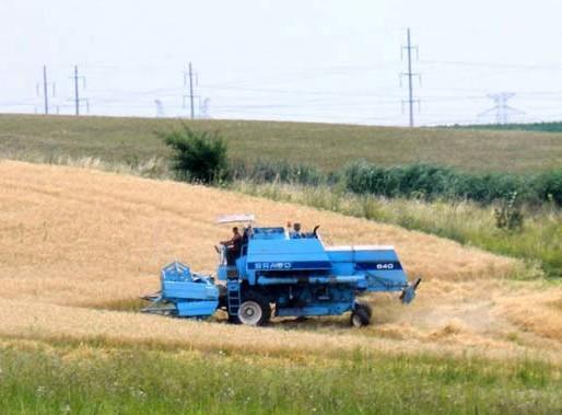 Blestemul cultivatorilor de grâu: producţie de excepţie, preţuri de nimic