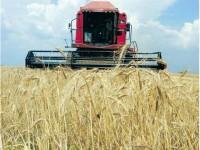 Subvenţii pe suprafaţă de aproape 14 milioane de euro primite de fermierii suceveni