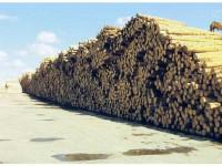 """""""Nu cred că e normal ca un judeţ cu jumătate de milion de hectare de păduri să-şi pună problema crizei lemnului de foc"""""""