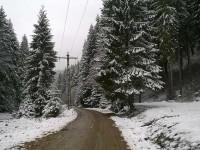 Cele 167.000 de ha de pădure solicitate de Biserica din Bucovina rămân în administrarea statului