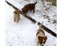 """Câini """"debarcaţi"""" în Suceava din localităţile din vecinătate"""
