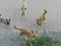 Primăria Suceava reia campania de capturare a câinilor vagabonzi