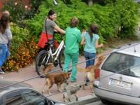 Mizeria făcută de câinii de companie, drastic amendată