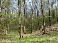 Regenerarea pădurii