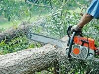 Tăierile ilegale din pădurile sucevene s-au triplat