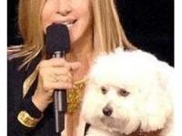 Căţeluşa Barbrei Streisand a muşcat o însoţitoare de bord a unei companii aeriene