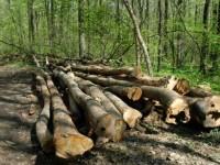 Cinci plângeri penale pentru doborâre abuzivă de arbori