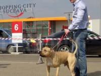 Shopping City Suceava va găzdui, în luna mai, singura expoziţie chinologică internaţională din Moldova