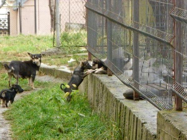 400 de câini fără stăpân ar urma să dispară din adăpostul din Lunca Sucevei