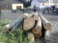 Botoşăneni prinşi cu lemn ilegal pe un drum din Liteni