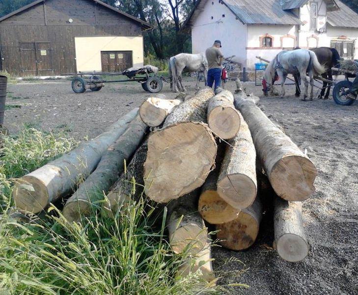 lemne bustean 2