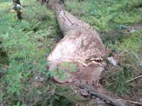 Folosirea ilegală a ciocanului de marcat sau subdimensionarea volumului de masă lemnoasă pusă în valoare