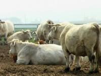 Amenzi de peste 77.000 lei şi suspendarea activităţii a două unităţi de procesare a laptelui