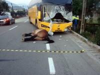 Un tânăr de 28 de ani a murit ieri după ce a lovit cu autocarul un cal