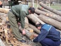 Peste 165 mc de lemn cu statut ilegal, confiscat de poliţişti şi silvicultori în două zile de control