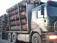 Transporturi ilegale de material lemnos depistate de poliţişti în traficul rutier