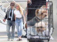 Pedeapsă uşoară pentru soţia lui Johnny Depp în dosarul introducerii ilegale a câinilor săi în Australia