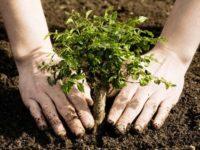 Asociaţia Administratorilor de Păduri şi Universitatea Suceava, cu sprijinul Holzindustrie Schweighofer, vor planta un milion de puieţi