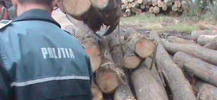 Aproape 30 mc de lemn fără acte depistaţi de poliţişti