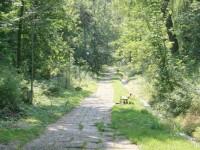 Pădurile-parc Şipote şi Zamca, greu de trecut la Primăria Suceava