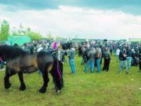 Peste opt mii de persoane au participat la Târgul de cai de la Horodnic de Sus