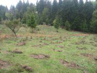 Împăduriri la Ocolul Silvic Bisericesc Ilişeşti