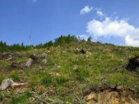În judeţul Suceava au fost identificate, în 2016, aproape 300 de cazuri de tăieri ilegale de arbori