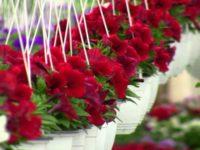 Primăria Suceava a găsit constructor pentru noua seră de flori