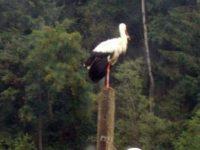 Apel pentru protejarea pasărilor migratoare afectate de ger