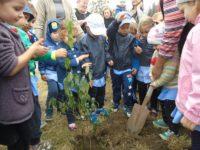 """Preşcolarii fălticeneni, implicaţi în activitatea internaţională """"Plantează un copac pentru pace – 2016"""""""