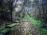 Municipiul Suceava urcă în clasamentul spaţiilor verzi pe cap de locuitor