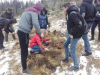 Pădure nouă plantată de elevii de la CTIA Suceava
