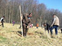560 de puieţi de stejar plantaţi pentru evocarea celor 560 de ani de la urcarea pe tron a lui Ştefan cel Mare