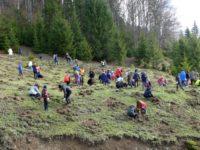 Voluntari ai Holzindustrie Schweighofer, alături de elevi, au plantat puieţi de molid şi brad pe raza Ocolului Silvic Stulpicani