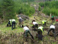 Acţiune de reîmpădurire a unui teren forestier din Şaru Dornei
