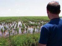 Culturile agricole de pe 150 ha au fost calamitate
