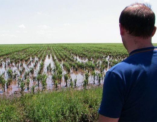 Asigurările din agricultura suceveană sunt la pământ