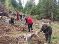 Peste 23.000 de voluntari la acţiunile de împădurire derulate de Romsilva