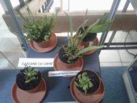 Plantele carnivore şi lecţia despre supravieţuire