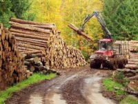 Foame nepotolită de lemn în judeţul Suceava