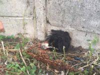 Pompierii au salvat un câine care şi-a prins capul într-un gard din beton
