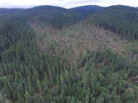 Furtunile au făcut prăpăd în pădurile sucevene