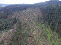 Furtuna de marţi a provocat doborâturi de peste 50.000 mc
