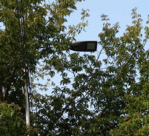 Noile lămpi LED din Suceava, montate între ramurile arborilor