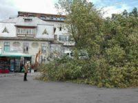 Autogara Suceava – un arbore de dimensiuni impresionante s-a rupt în urma furtunii