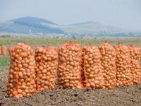 """Recoltă """"slăbuţă"""", preţ mare la cartofi"""