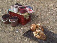 Peste 300 kg de ciuperci confiscate de poliţiştii suceveni