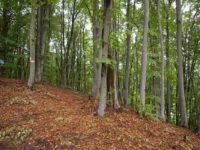 Aerul Pământului se curăţă şi foşnetul pădurii se aude din nou